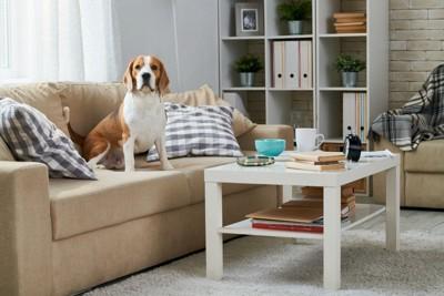 テーブルの前のソファーに座る犬