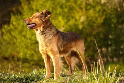 草原に立つ雑種犬