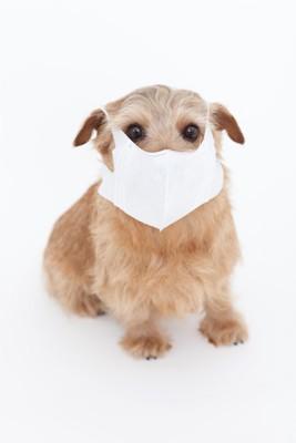 白いマスクをした犬