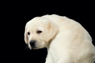 しょんぼりした表情で振り向く犬