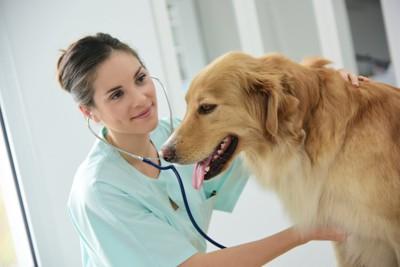 獣医師に診察される犬  94502100
