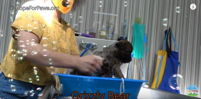 子犬を洗う
