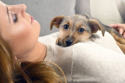 飼い主の胸にあごのせする犬