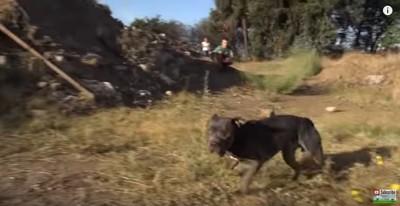 カメラを見ながら走る犬
