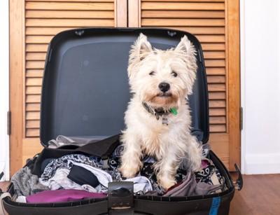 開いたスーツケースに座るテリア