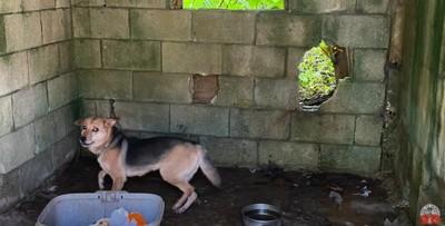 倉庫に繋がれた犬2