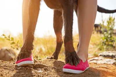 女性の足に足を乗せている犬