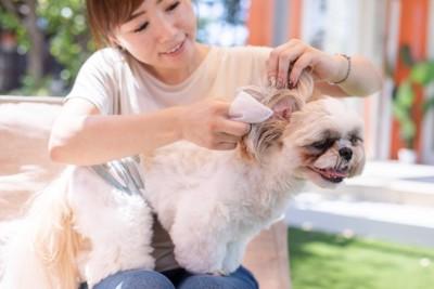 犬の耳掃除する女性