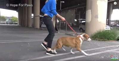 リードを付けて歩く犬
