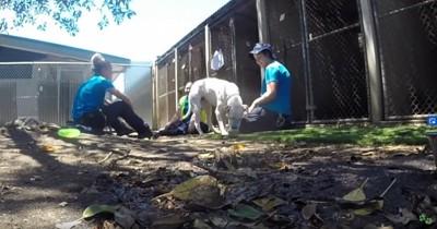 犬舎の近くに3人の女性と犬