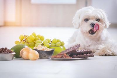 犬が食べてはいけない食材と舌を出している犬
