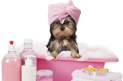 タオルを巻いた犬