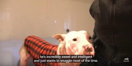ベストを着た犬