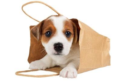 紙袋に入る犬