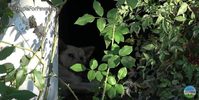 家の陰に身を隠す犬