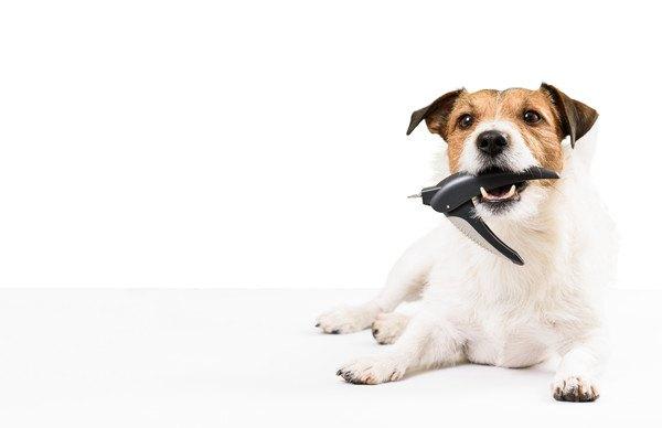 トリマー用品をくわえる犬