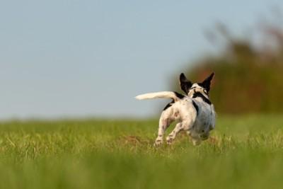 草原で走って逃げる犬の後ろ姿