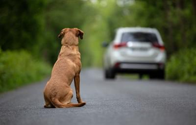 去る車と犬の後ろ姿