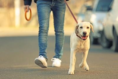 道路を歩く犬と人