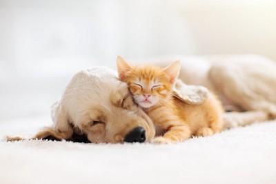 寄り添って眠る犬と猫