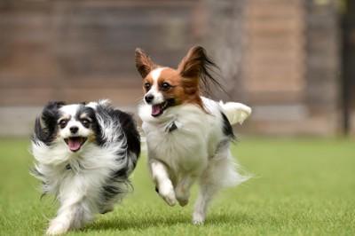 ドッグランで遊ぶ犬達