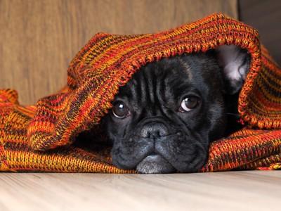 怯えて隠れる犬