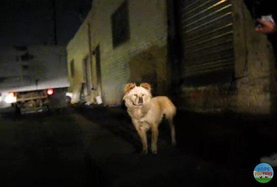 警戒中の犬