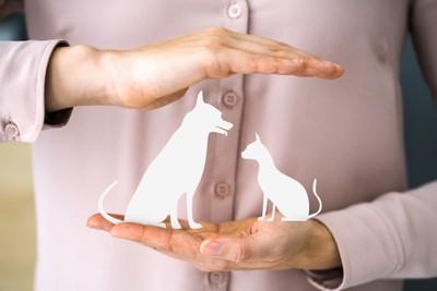 犬猫のシルエットを包む手