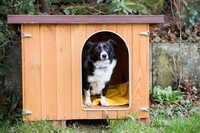 犬小屋に居る犬