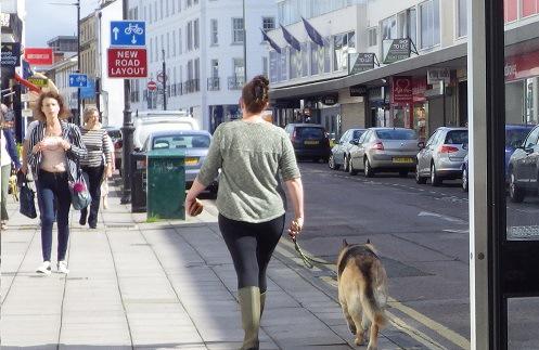 犬とお散歩