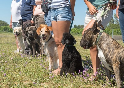 一列に並んだ様々な犬と飼い主たち
