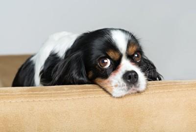 こちらを見て気にしているような犬