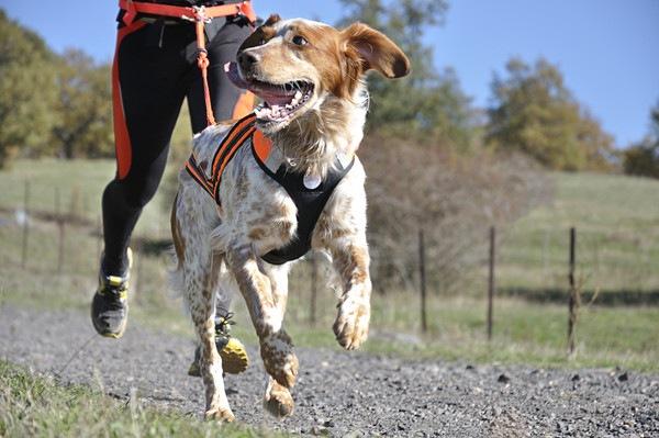 95721366 飼い主とランニングする犬
