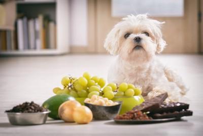 毒性の食べ物を前にする犬