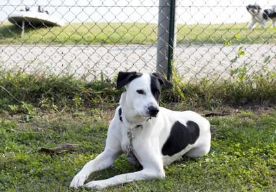 柵の前の犬