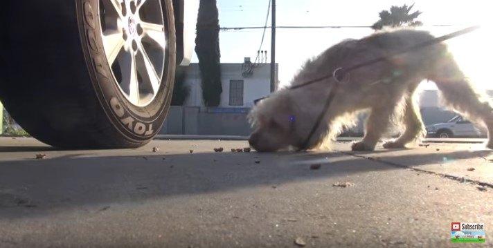 輪に首を突っ込む犬
