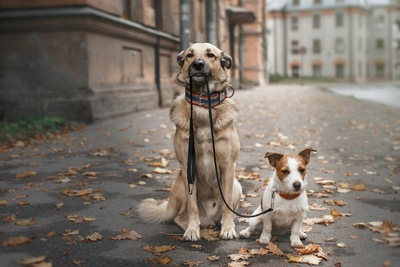並んでいる小型犬と大型犬