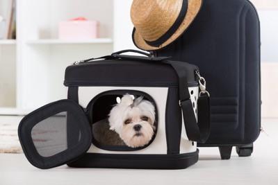 キャリーバッグの中の犬