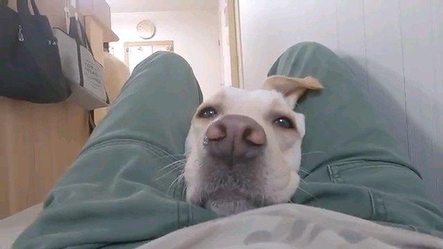 人の股の間に入る犬