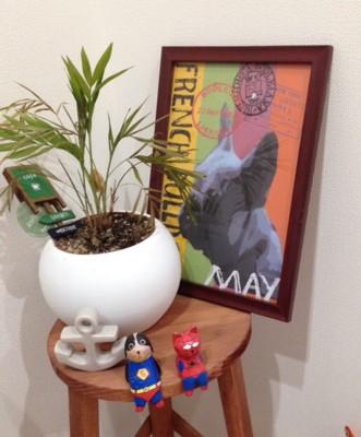 観葉植物と壁飾りの写真