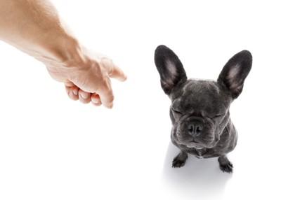 飼い主に指を指され怒られている犬