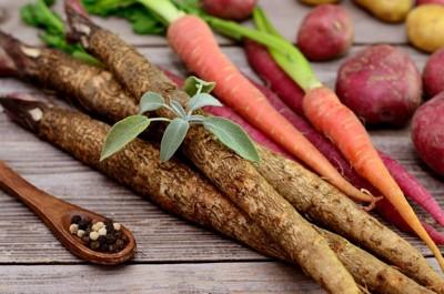 根菜類の写真