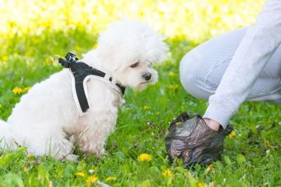 ウンチを拾うところを見ている犬