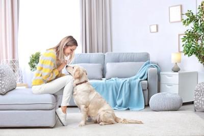 ソファーに座る飼い主の膝に顎を乗せる犬
