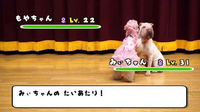 みぃちゃんの~字幕