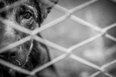 ネット越しの犬のモノトーン写真
