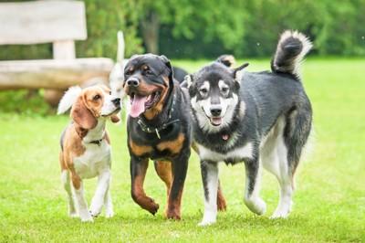 並んで歩く三頭の犬