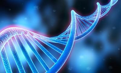 遺伝子モデル図