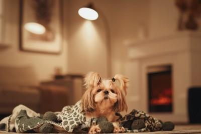 室内でブランケットに包まって暖を取る犬