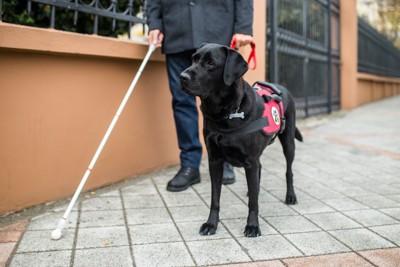 目の不自由な人と盲導犬の黒ラブ